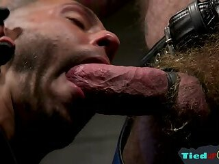 Bears,Bondage,Blowjob,leather,muscle,hairy,gay Hairy gay bear gets his cock sucked